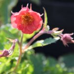 2 geum flames of pass